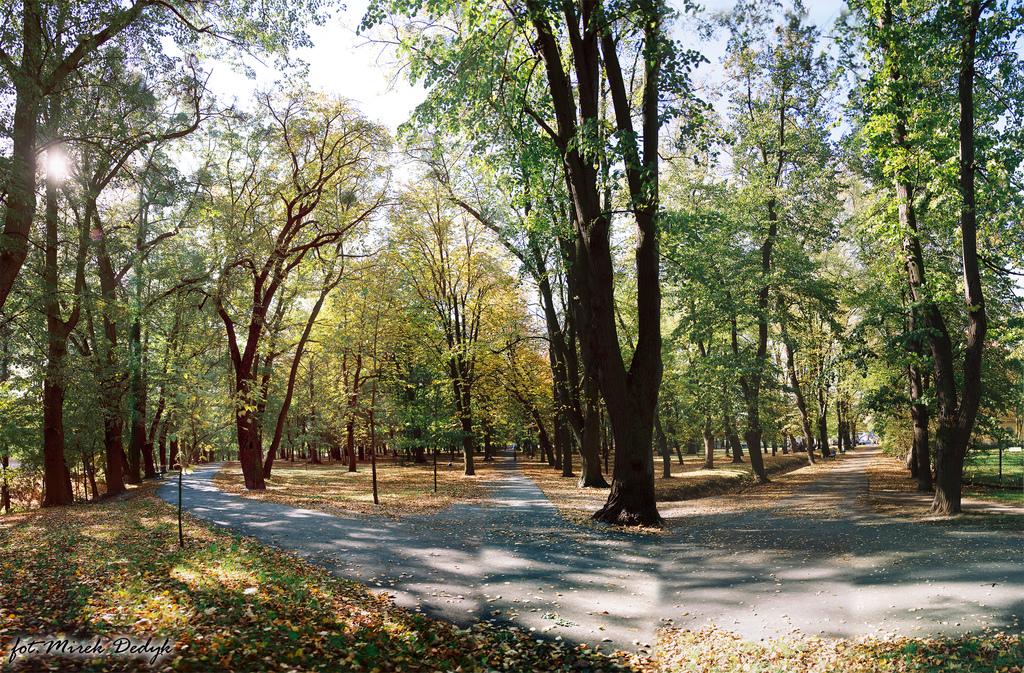 park kopia fot.Mirosław Dedyk.jpeg
